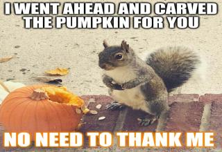 squirrel eating pumpkin:  I went ahead and carved the pumpkin for you, no need to thank me